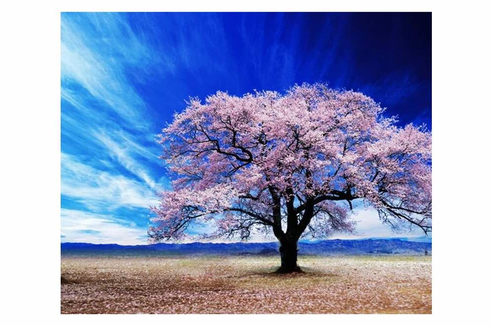 Cherry Blossom Tree Wall Art: Buy Wall Art Online On Wao